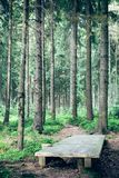 Wood bridge in the forest Royalty Free Stock Photos