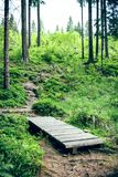 Wood bridge in the forest Royalty Free Stock Images