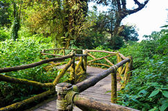 Wood bridge in the forest. Stock Photo