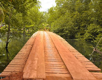 Wood bridge in the forest Royalty Free Stock Image