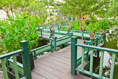 Wood bridge in the garden. Wood bridge and green leaf in the garden royalty free stock photography