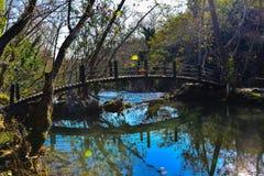 Wood bridge and green lake Stock Image