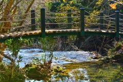 Wood bridge and green lake Royalty Free Stock Images
