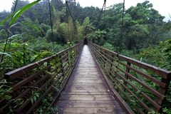 Wood Bridge. In green valley in Xitou Nature Education Area, which is a forest park in Nantou county, Taiwan Royalty Free Stock Image