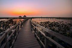 Wood bridge in lake water lily stock photo
