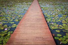 Wood bridge in a lotus pond Stock Photo