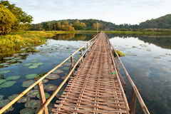 The wood bridge in lotus pond Royalty Free Stock Photo