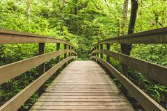 Wood Bridge in Lush Forest. Wooden foot bridge leading into thick, green, lush forest. Walking path in Columbia River Gorge, Oregon, USA Royalty Free Stock Images