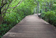 Wood bridge in mangrove forest Royalty Free Stock Image