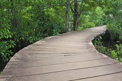 Wood bridge in mangrove forest Stock Images