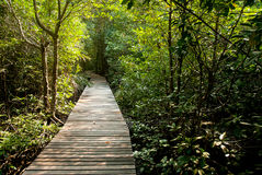 Wood Bridge into mangrove forest Royalty Free Stock Photography