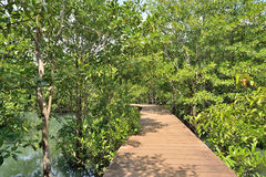 Wood bridge in mangrove forest Stock Photos