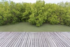 Wood bridge in mangrove forest for background. And object , texture stock photos