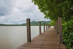 Wood bridge in mangrove forest stock image
