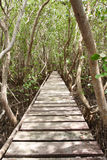 Wood bridge in mangrove forest, middle of Thailand Royalty Free Stock Image