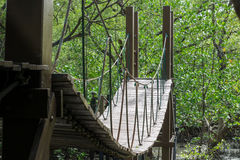 Wood bridge in mangrove forest. Royalty Free Stock Images