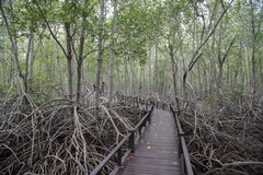 Wood bridge and mangrove forest in Pranburi, Prachuab Khiri Khan Royalty Free Stock Images