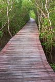 Wood bridge in mangrove forest, Thailand Royalty Free Stock Images