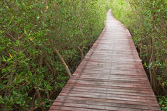 Wood bridge in mangrove forest, Thailand Stock Photos
