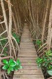 Wood bridge in mangrove forest, Thailand Stock Photo