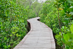 Wood bridge in mangrove forest Thailand Stock Photos