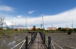 Wood bridge in mangrove. Mangrove forest trail in Thailand Stock Photography