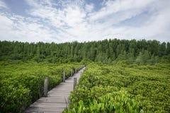Wood Bridge Mangrove forest walkway Stock Photography