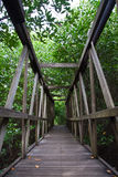Wood bridge in mangrove national park. Wood bridge in Thailand mangrove national park image Stock Photos