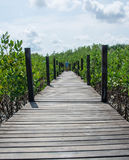 Wood bridge in mangrove the way study nature at thung prong thong , Thailand Royalty Free Stock Photography