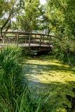 Wood Bridge Over Algae Covered Pond Stock Images