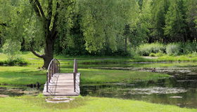 Wood bridge over water. Pretty wooden bridge curved over water with green grassy lawns and weeping willows in the distance Royalty Free Stock Photo