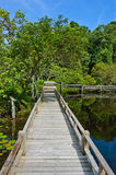 Wood bridge through peat swamp forest Royalty Free Stock Photos