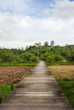 Wood bridge on the rice field Stock Photography