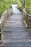 Wood bridge on the river Royalty Free Stock Photos