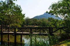Wood bridge. In thailand stock photo