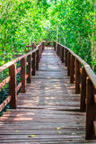 Wood bridge to forest Royalty Free Stock Image
