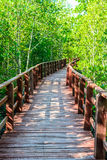 Wood bridge to mangrove forest Stock Images