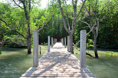 Wood bridge. Under tunnel of Mangrove tree stock photography
