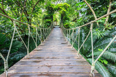 Wood bridge for walking in the garden Royalty Free Stock Images