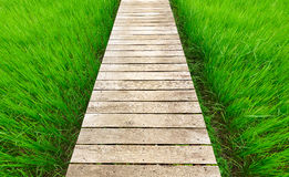 Wood bridge walkway along green rice field Stock Image