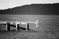 Wood bro över havet Royaltyfri Fotografi