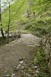 Wood bro i bergen Royaltyfri Bild