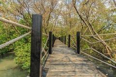 Wood bro i mangrove vägen Royaltyfri Fotografi