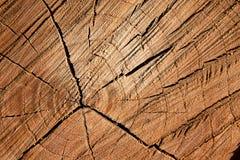Wood brown closeup Stock Images