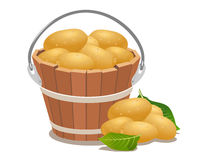 Wood bucket full new potatoes Royalty Free Stock Photography