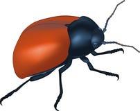 Wood bug Royalty Free Stock Images