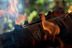 Wood burn in the fire Royalty Free Stock Photo