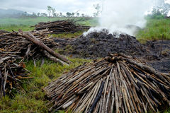 Wood burners in africa with smoke and charcoal royalty free stock photo