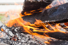 The wood burning in a bonfire Royalty Free Stock Image