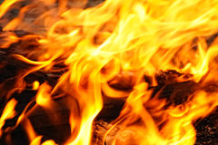 Wood burning in the fire Royalty Free Stock Photo